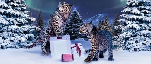 regali, natale, natale 2012, feste, Cartier, gioielli, gioielli Cartier, anelli, collane, orecchini